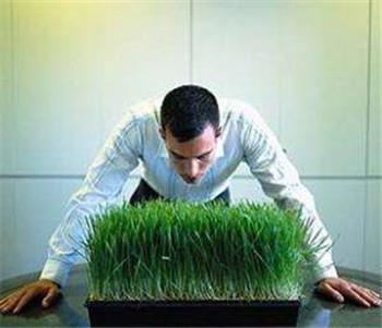 植物神经紊乱的特效药有哪些